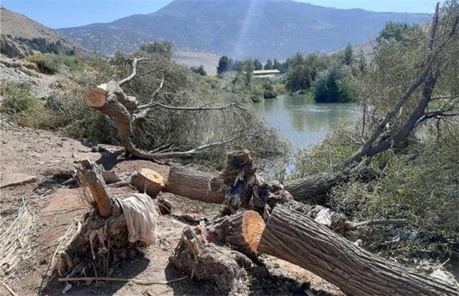 قطع ۲۷۰ درخت اشترانکوه به بهانه مقابله با سیل