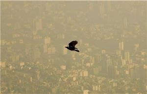  نقش «ما» در کاهش آلودگی هوا
