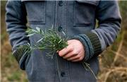 این گیاهان معجزه گر قاتل سرطان هستند!